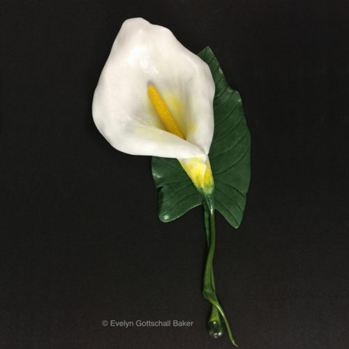 Evelyn Baker Calla Lily