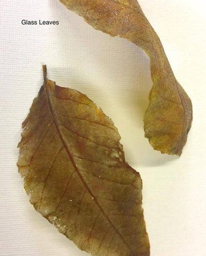 Evelyn Baker Fused Glass Leaves
